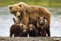 """Bear's Inner Peace"" by Staff Sergeant Tricia Bear"
